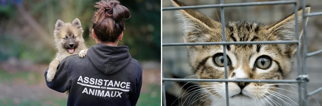 protection animale sur take care
